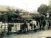 鋪設輕便鐵軌運送鳳梨產品至九曲堂火車站〈劉明財先生提供〉