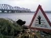濕地已毀,水深危險的三角標示,格外諷刺!