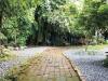 放慢腳步,大樹最美麗的後花園