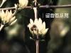 大樹文史旅遊季-留香風味篇