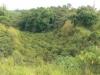 在天然山谷裡種植咖啡樹