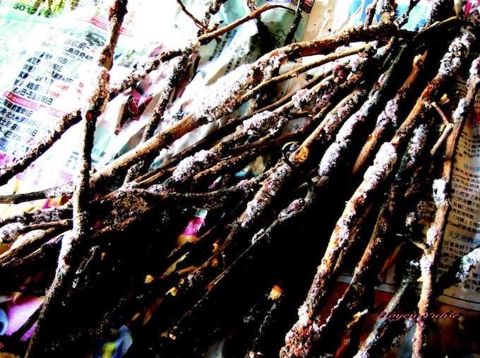 荔枝枝幹上的蟲膠